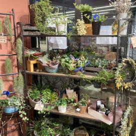 観葉植物と多肉植物のコーナーが出来ました!