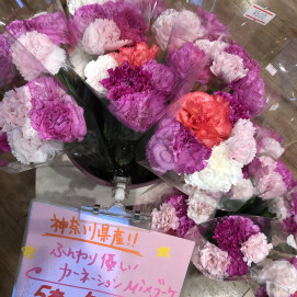 ☆本日入荷の切り花