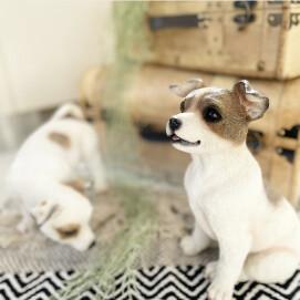【特集】ビーグル犬と遊ぼう♪