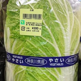 12月14日のおすすめ!『白菜』