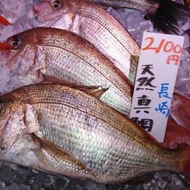11月12日のおすすめ!『天然真鯛』