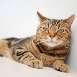 【3F 猫カフェ】猫スタッフのご紹介vol.27 マロン