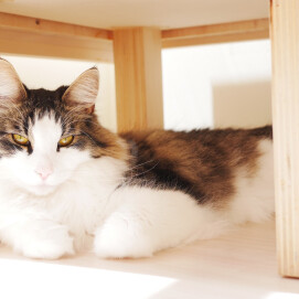 【3F 猫カフェ】誕生日会開催のお知らせ