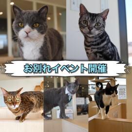 【3F 猫カフェ】お別れイベントのお知らせ📢