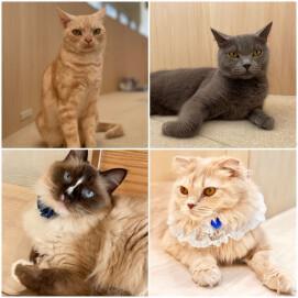 【3F 猫カフェ】誕生日会開催のお知らせ vol3