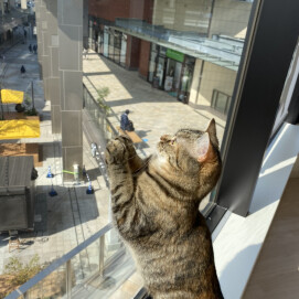 【3F 猫カフェ】猫スタッフのご紹介vol.24 ニョッキ