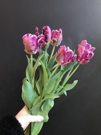 ☆春のお花チューリップ🌷