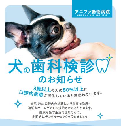 犬の歯科検診のご案内